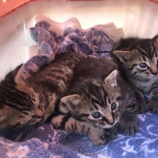 9月に産まれたばかりの3兄弟の里親さん募集中