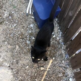 庭に迷い込んできた黒猫の男の子 里親募集中