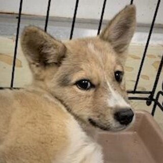 ◆可愛い子犬◆を家族に迎えませんか? No390