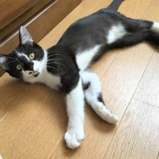 遺棄され死の淵から復活した子猫は白血病でした