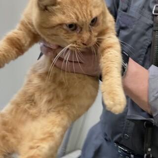 引き出されました!飼猫だった茶トラ君。