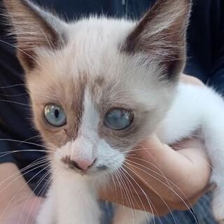 人なつこい可愛い子猫です