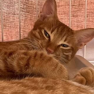 スーパースリゴロ猫のいち