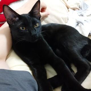 スリゴロの小悪魔系黒猫ふみ♀