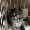 モフモフの可愛い子猫