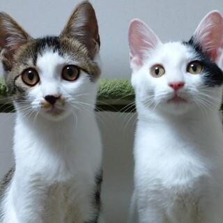 【10/17月島】ちょっぴり怖がりな美猫兄妹