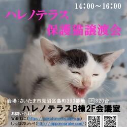 11/3(祝)ハレノテラス保護猫譲渡会