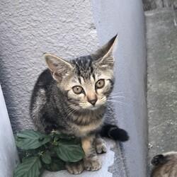 ナデナデ大好き生後2ヶ月の子猫