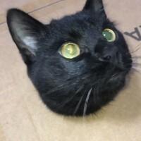 ミミ 黒猫
