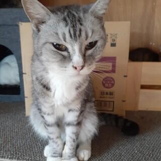 【保護猫】フワフワの成猫ちゃん