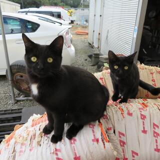 生後5か月の黒猫です首に白い斑点があり可愛いです