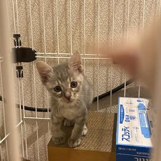 子猫あきちゃん