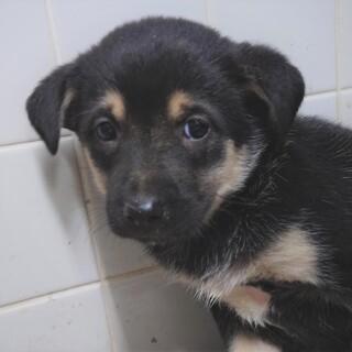 ◆可愛い子犬◆を家族に迎えませんか? No405