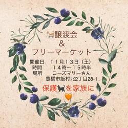 愛知県豊橋市 保護猫の譲渡会&フリーマーケット