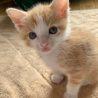 生後約3週のかわいい子猫「ジャイケル」