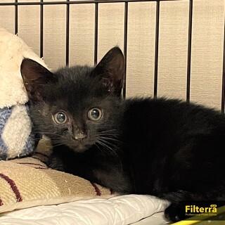長毛 可愛い黒猫ちゃん