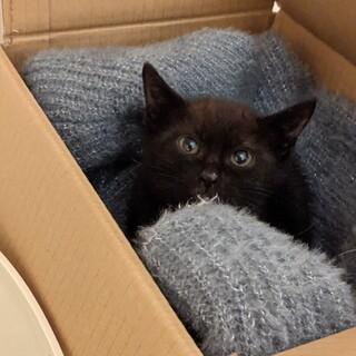 とっても可愛い黒猫ちゃん