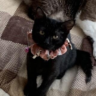 もふもふ、フワフワなヌイグルミのような可愛い黒猫君