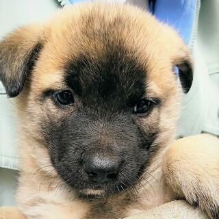 ◆可愛い子犬◆を家族に迎えませんか? No407