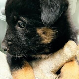 ◆可愛い子犬◆を家族に迎えませんか? No408