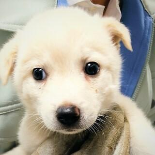 ◆可愛い子犬◆を家族に迎えませんか? No409