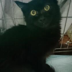 猫ちゃんの里親譲渡会IN高井戸CHICHI サムネイル2