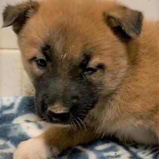◆可愛い子犬◆を家族に迎えませんか? No411