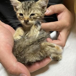 生まれたばかりの大人しい子猫ちゃんです