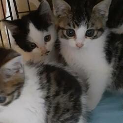 ※1ヵ月半の仔猫5匹会場に来ます【相模大野駅前北口デッキ】♪猫の譲渡会♪