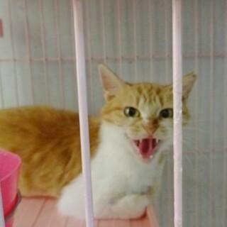 術後、外に戻された猫