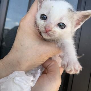 超甘えん坊の子猫