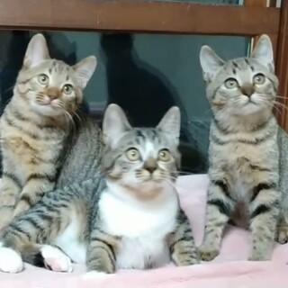 まんまるモフモフ3姉妹