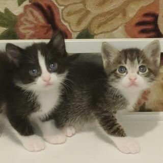 ママと子猫6匹の美猫ファミリー
