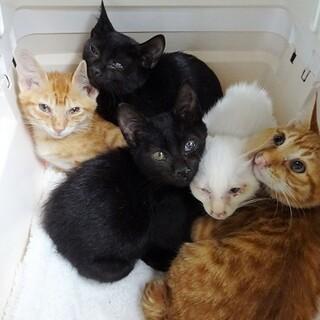 捨てられた母猫が出産した子猫達