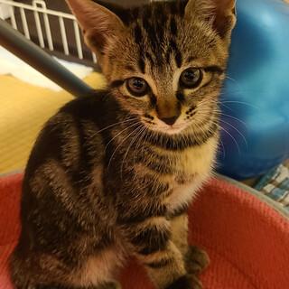 キジ 子猫4兄弟(2ヶ月)