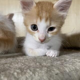 垂れ耳がかわいい茶白猫ちゃん