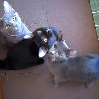 虐待地域から救った子猫3匹の里親さんを募集します