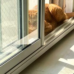ネコのビタミンD