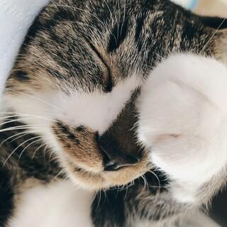 美形なメスネコ!