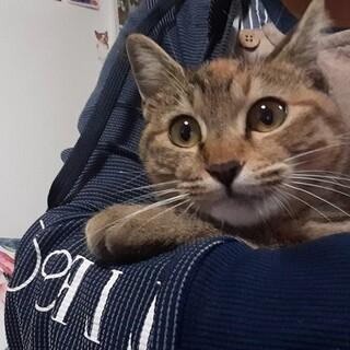 猫との生活が初めての方にもお勧めにゃんこです
