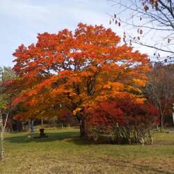 紅葉到来!そして冬の足音が…