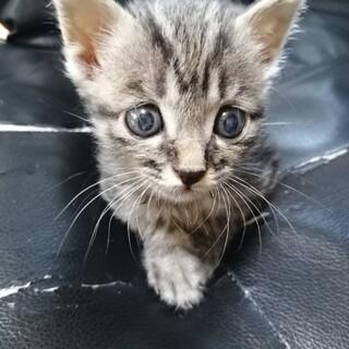 子猫ちゃんを大切に育ててくれる方を探しています。