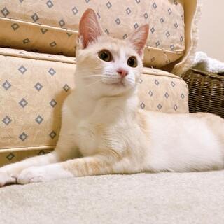 マーブル模様の美しい女の子『チェルシー』5ヶ月