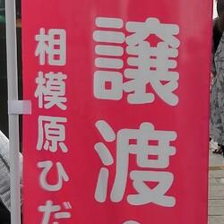 ※開催します【相模大野駅前北口デッキ】♪猫の譲渡会♪