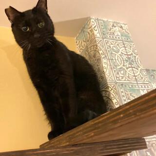 お母さんとずっと一緒の黒猫『クー』